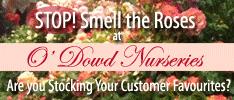 ODowd Nurseries - Specialising in Roses