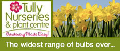 Tullys Nurseries-The widest range of bulbs ever...